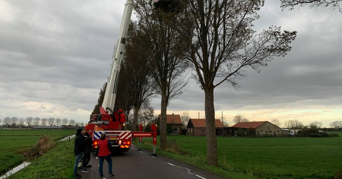 Brandweer redt kat uit boom in Mijdrecht.