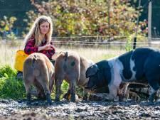 De varkens gaan over twee weken naar de slacht en komen terug in vacuümzakken
