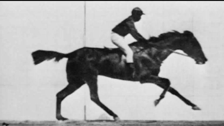 Beeld uit 's werelds eerste film, Race Horse (1878) Beeld
