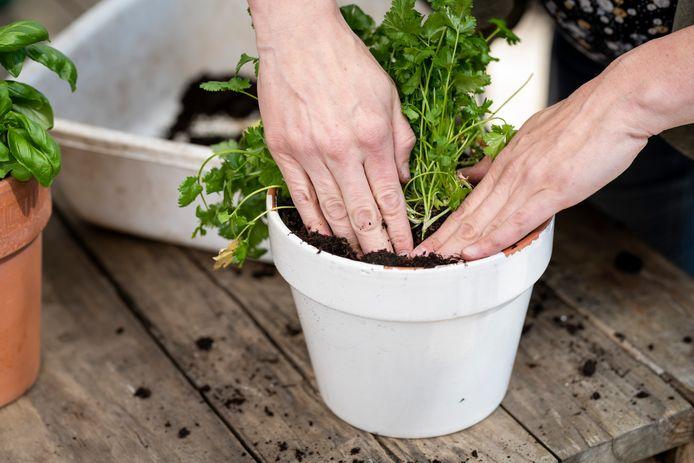 Près de 40% des dépenses concernent les plantes et les fleurs.