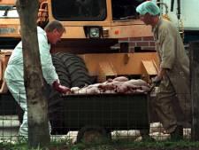 Dierenartsen vrezen voor massale ruiming varkens