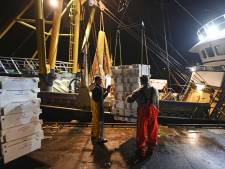 Vissen in Noordzee wordt hele puzzel voor Scheveningse vissers