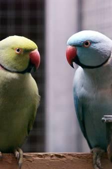 Tientallen uitheemse vogels in beslag genomen in Udenhout, 17 overleden