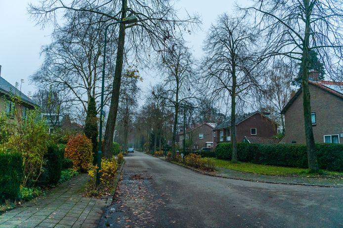 Binnenkort worden er 137 bomen gekapt en vervangen door kleinere bomen.