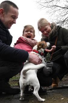 Lief! Tientallen honden na jaarwisseling weer met baasjes herenigd in pension