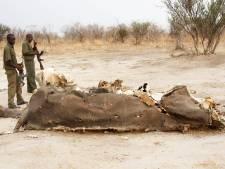 40 éléphants empoisonnés en une semaine au Zimbabwe