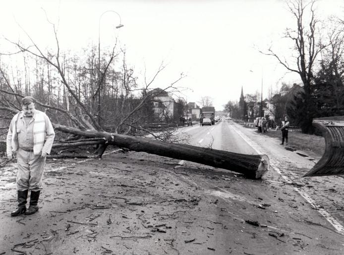 Laatste omgekapte boom Eindhovenseweg Aalst/Waalre (29-12-1978).