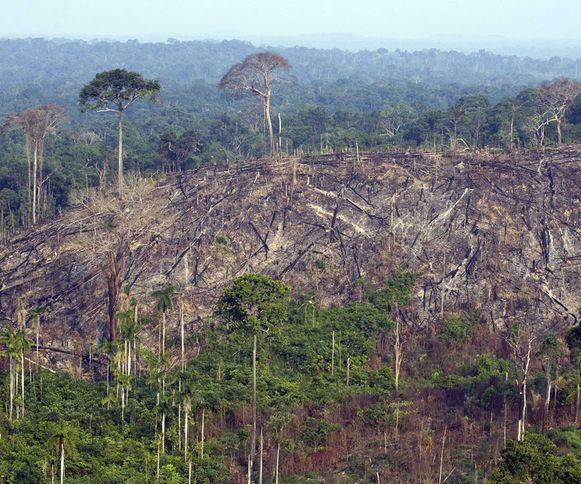 De belangrijkste boosdoener van de slinkende dierenpopulaties is volgens de natuurorganisatie de mens.