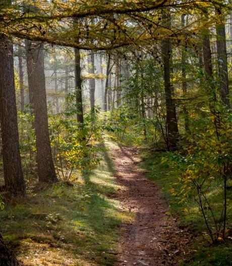 Bosbrigade Nunspeet gaat bossen bijhouden