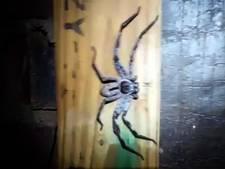 Gigantische horrorspin terroriseert woonhuis