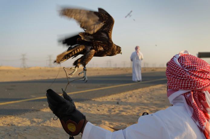 De valkenjacht is de grote passie van rijke arabieren. Het leidde voor Qatar tot de duurste jacht ooit.