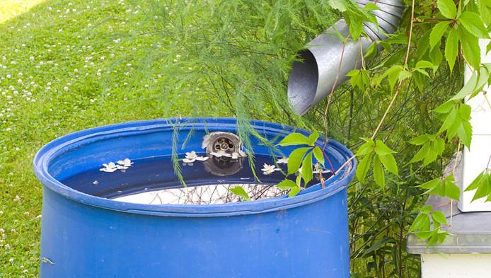 Met de regenton kan worden bespaard op drinkwater.