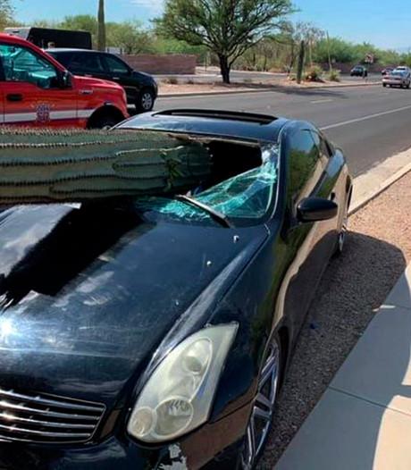 Enorme cactus door voorruit verrast automobilist in Arizona