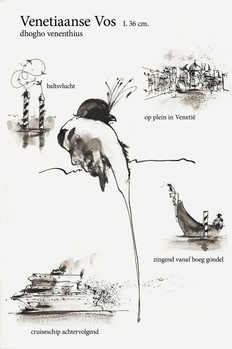 De Venetiaanse Vos heeft karakteristieke voorhoofdspluimen. Beeld O.C. Hooymeijer
