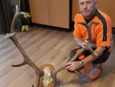 Door Duitsers gestolen hertengewei is na 76 jaar terug bij Nationaal Park De Hoge Veluwe