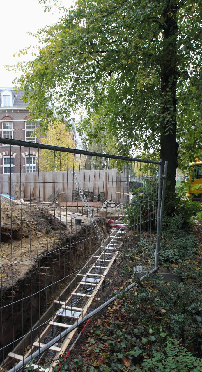 Bomen worden niet of nauwelijks beschermd bij bouwwerkzaamheden, stelt Zwolle Groenstad.
