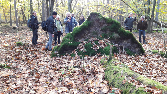 Hans van der Lans (geblokte blouse) neemt een aantal natuurliefhebbers mee op excursie langs omgeduwde en afgebroken bomen.