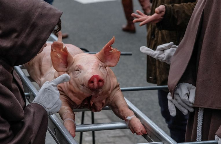 Varkens werden in het verleden gezien als beschermers tegen de pest.