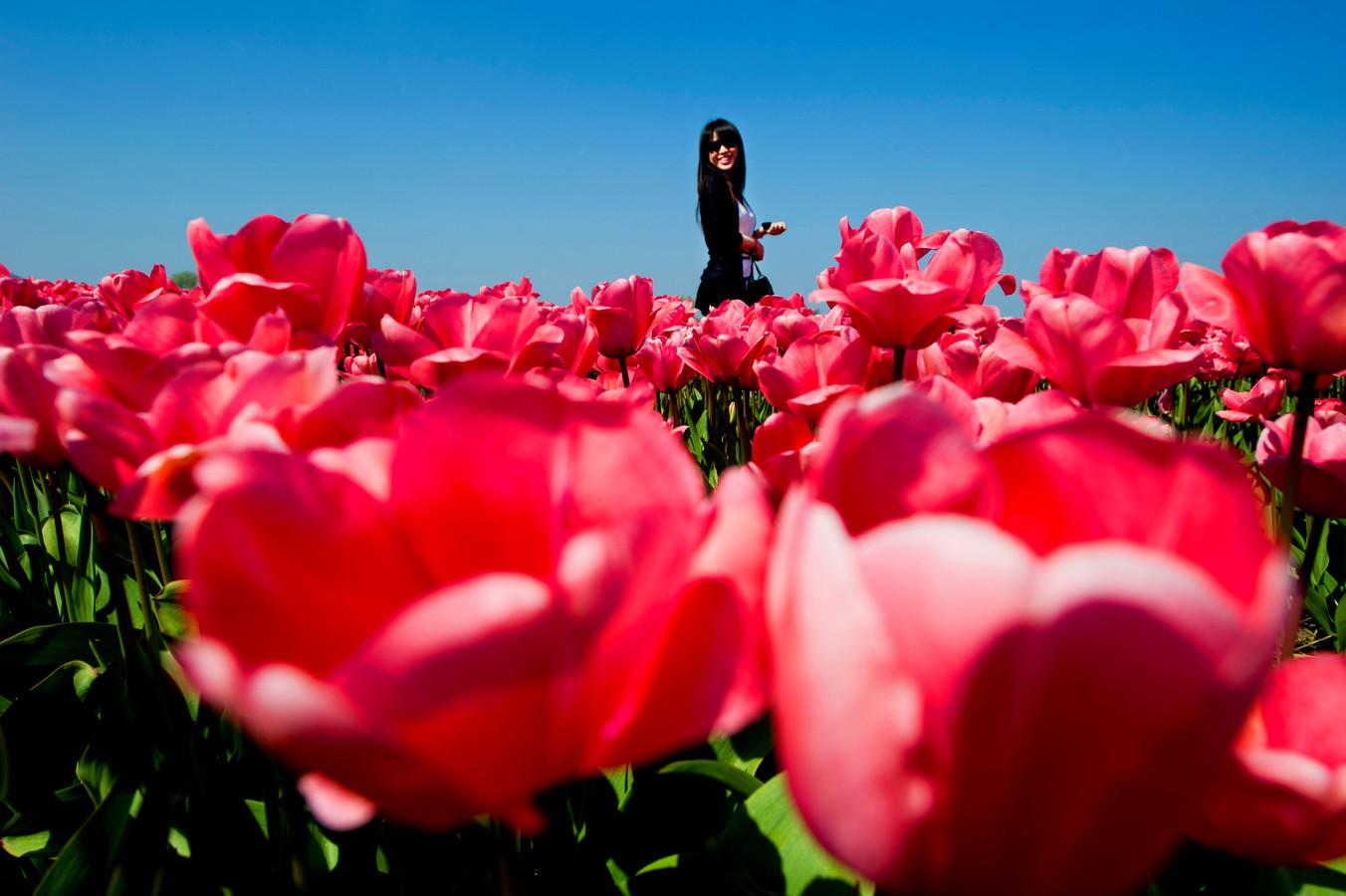 Toeristen zetten op de foto tussen de bloemenvelden.