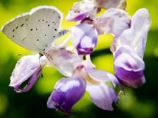 'Tuincentra, ga de natuur écht helpen en biedt de juiste planten aan'