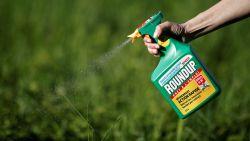 Na Roundup gaat ook onkruidbestrijder Bofix op de schop. Hoe verlossen we nu onze tuin van onkruid?