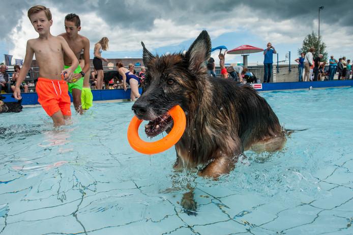Op de laatste dag van het zomerseizoen was zwembad De Loete gevuld met honden en hun baasjes tijdens de Hondenplons.