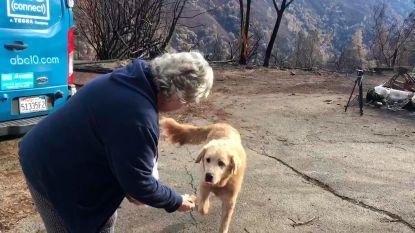 Trouwe hond blijft maand lang waken aan afgebrand huis