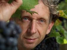 Nijkerkse wijngaard valt in de prijzen: 'een mooi jaar'