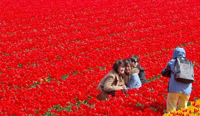 Toeristen begeven zich tussen de bloemen om een foto te maken.