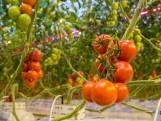 Greenports: 'Kwekers en handelaren kennen door corona per week tonnen schade'