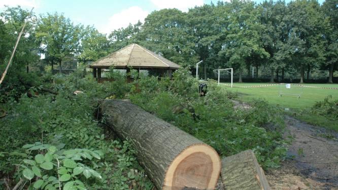 Geen nieuwe boom geplant na vellen of tuingrond verhard zonder vergunning? 19 randgemeenten gaan ruimtelijke ordening samen handhaven