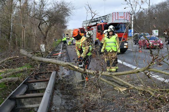 Op de E19 belandde een boom  deels over de pechstrook en een deel van de rijbaan.