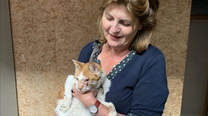 Kat die drie jaar geleden uit auto van Nederlands gezin sprong in Rekkem, herenigd met eigenaars