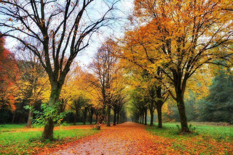 Het Amsterdamse Bos is in de herfst nog mooier dan in de zomer Beeld Shutterstock