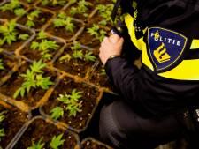 Project 'hensplantages' werkt, Breda stapt ook in