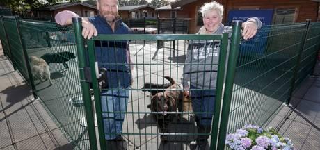 Honden baden in luxe in pension in Brummen