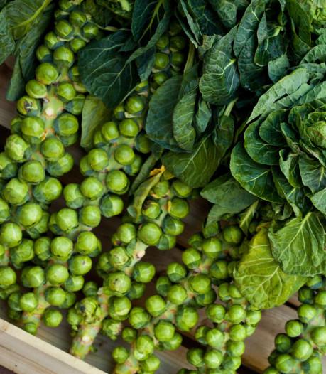 Winter: plant deze groenten en je kunt telkens blijven oogsten