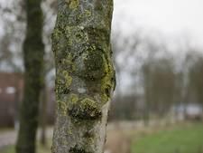 Zwolle kapt 2.000 door schimmel aangetaste essen