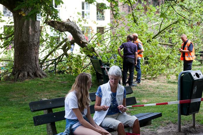 De afgebroken tak van een kastanje maakte twee jaar geleden in Zutphen zes slachtoffers.