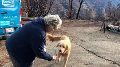 Hond wacht maand lang op baasje aan afgebrande woning