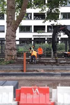 Verlengd leven voor platanen Weerdjesstraat Arnhem