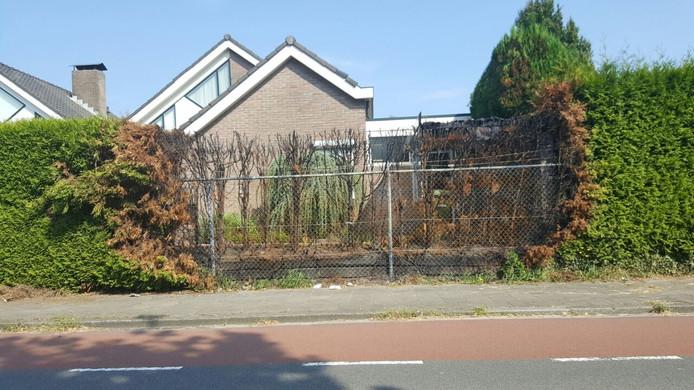 Een coniferenhaag aan de Potsweg ging in vlammen op.