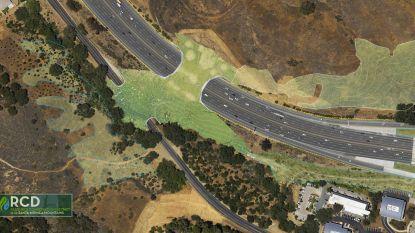 Californië wil grootste oversteekbrug ter wereld bouwen, voor poema's