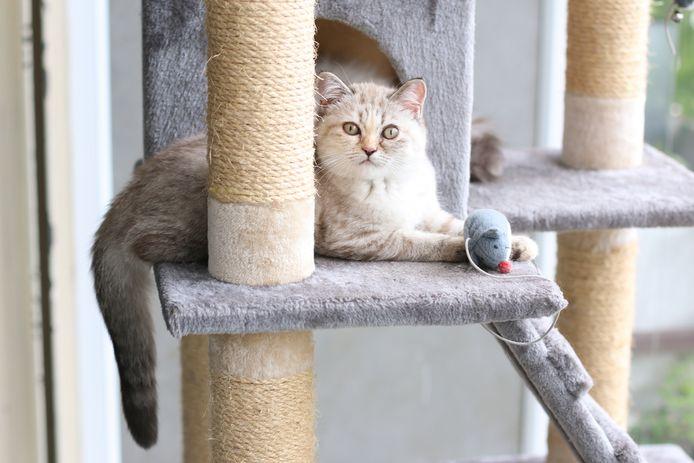Moeten katten verplicht binnen blijven?