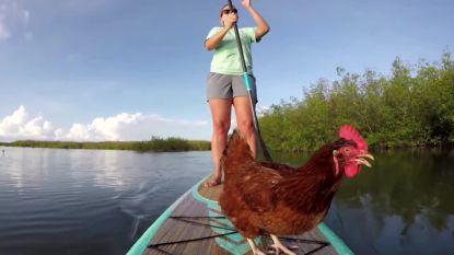 Dit is Loretta, de meest avontuurlijke kip ooit