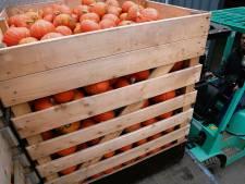 'Bedrijfswoning geen bezwaar' zegt Raad van State nu over plan pompoenenkweker Swifterbant