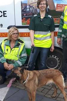 Ontsnapte 'politiehond' Cindy in Putten gepakt