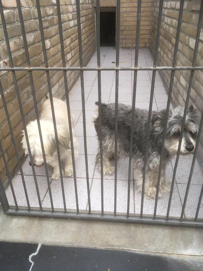 De hondjes hebben een paar weken in het dierenasiel gezeten.