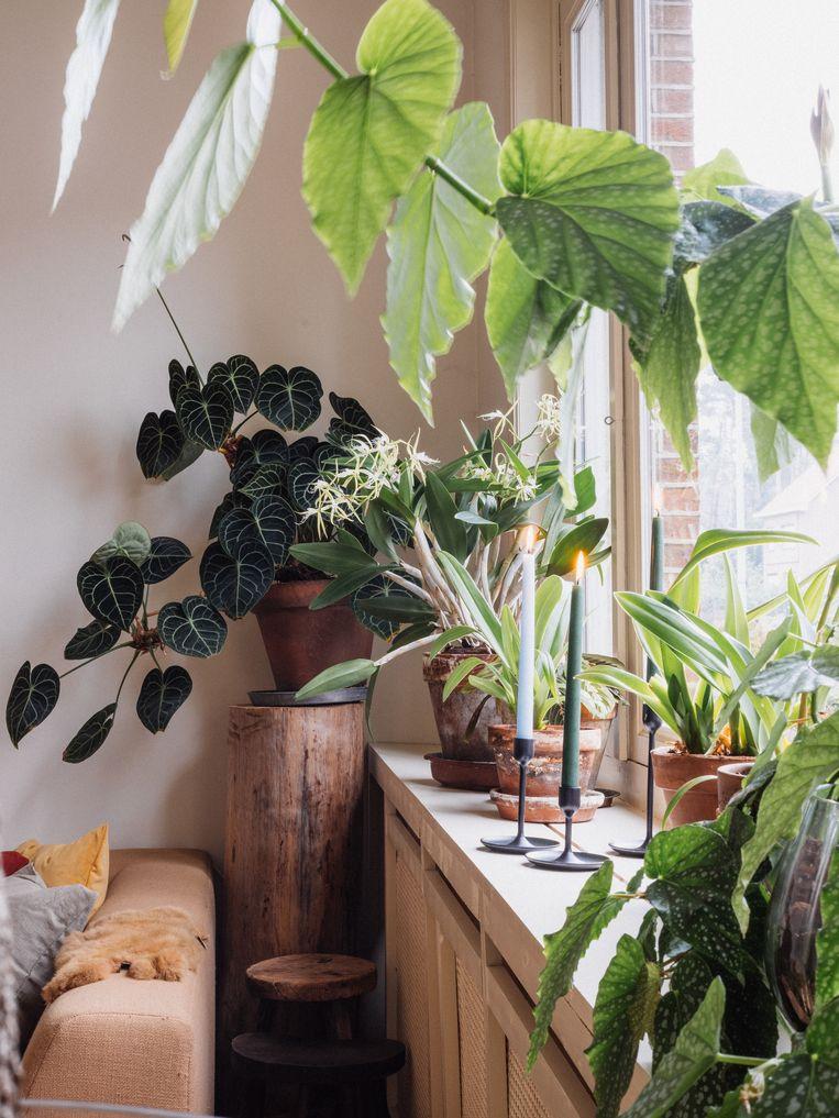 Het Urban Jungle - interieur van Seppe De Bie