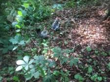 Wie dumpte twee hanen in bos Diepenveen? Dader kan drie jaar cel krijgen of fikse boete